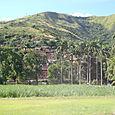 santa theresa rum plantation