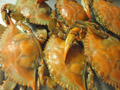 Crab cake prep 002