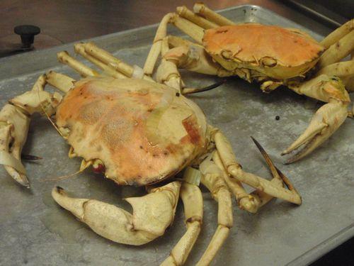 Chadzilla Golden Crab