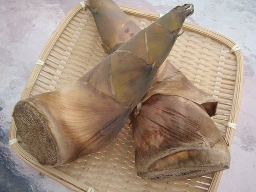 Bamboo 007