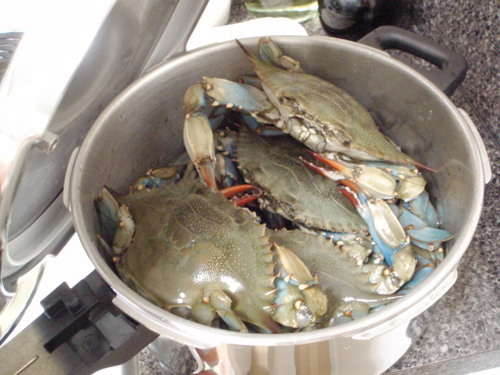 Crab_pressure_003