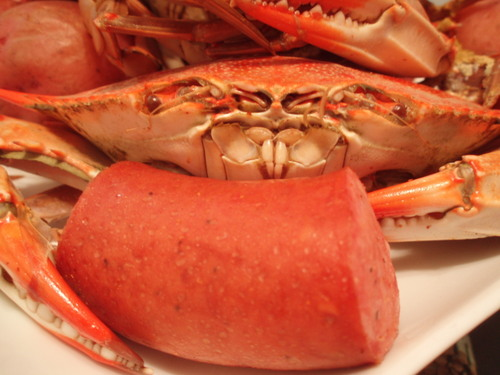 Crab_pressure_016
