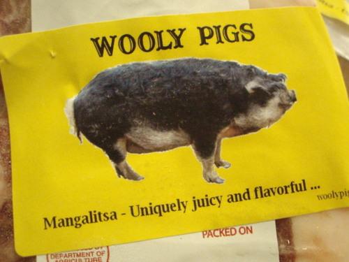 Wooly_pig_006