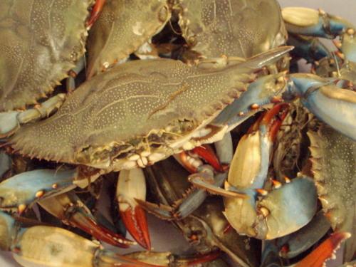 Crabs_001